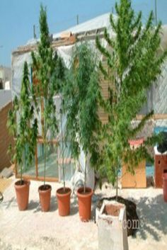 stonersdome:  shamelessinhaler:  rooftop best place to grow...