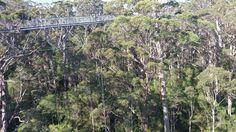Tree top walk, 41 meters from ground