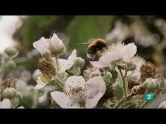 Un mundo sin abejas - El efecto abeja