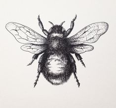 LordColinOneal posted a status: Here's a bumblebee i drew for a blog's logo. It's drawn in Black Ink, 7x10 140lb drawing paper.