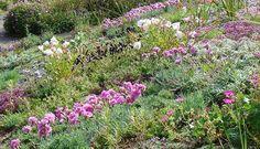 The Garden House, Dartmoor Devon