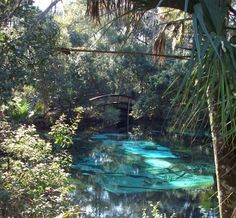 Gary and Delys RV Travels: Juniper Springs State Park and Tomoka State Park Rv Travel, Places To Travel, Places To See, Florida Camping, Florida Travel, California Camping, Southern California, Florida Springs, Florida Beaches