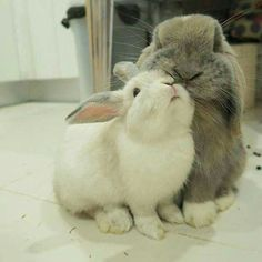 Bunnies are so capable of love and affection, if only people just took the time to understand their unique behavior.