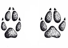 orma - cane e volpe
