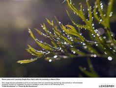 Lensbaby Macro kit by Transcontinenta, via Flickr  © Mel Brackstone  @Lensbaby