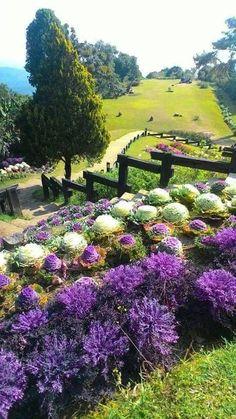 Beautiful Landscapes, Beautiful Gardens, Beautiful Flowers, Beautiful Places, Beautiful Pictures, Country Fences, Green Landscape, Dream Garden, Amazing Nature