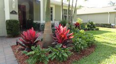 """florida front yard landscapes - Google Search ...""""hot"""" colored red plants and """"cool"""" green ferns make this an eye catching scape..."""