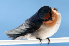 Small Birds, Little Birds, Colorful Birds, Pet Birds, What A Beautiful World, Beautiful Birds, Creatures, Swallows, Squirrels