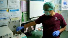 #weterynarz #IRAP,terapia na zwyrodnienia stawów u zwierząt,klinika dla zwierząt Jacka Szulca,Polska #Zgierz #lodz