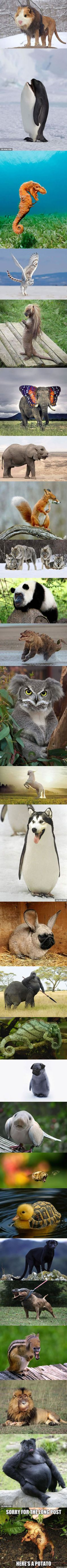 These animal hybrids never get old.