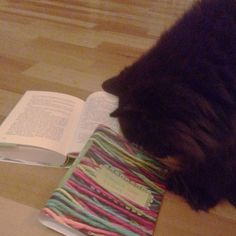 My cat Elias with my second novel.