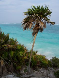 Violet's Silver Lining: 9 Things To Do In Cancun Mexico