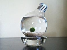 Marimo Moss Ball in a Repurposed Light Bulb by eve