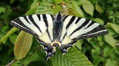 #butterflyofinstagram #butterflies #butterfly #butterfly #worldbutterflies #bugs #buglife #insect_macro #insect_addict #insect #insectstagram #insects #insect_perfection #kings_insects #insects_of_our_world #insectsofinstagram #macrolovers #macros #macrolovers #macro #macrophotography #macro_perfection #macro_creature_feature #naturelovers #natureshots #beautifulnature #purenature #nature_perfection #naturalbeauty #naturephotography #flowerslovers #floweroftheday…