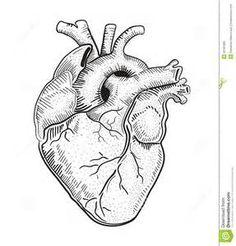 Le procrastinateur pinteres - Dessin du coeur humain ...