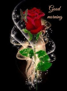 Search free flowers Ringtones and Wallpapers on Zedge and personalize your phone to suit you. Start your search now and free your phone Beautiful Flowers Wallpapers, Beautiful Rose Flowers, Beautiful Nature Wallpaper, Love Flowers, Rose Flower Wallpaper, Flowers Gif, Butterfly Wallpaper, Flower Images, Flower Pictures
