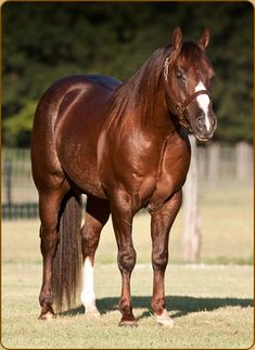 Sophisticated Catt » Brightstone Ranch 2002 Chestnut Stallion by High Brow Cat, LTE $197,507. 2011 NCHA Freshman Sire of the Year