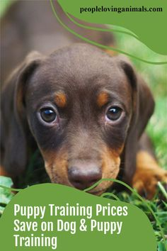 Dog Obedience Training Prices - Save on Dog and Puppy Training, dog training prices, puppy training prices, puppy obedience training prices, dog training cost, puppy training cost, dog training price list, cost of dog training, cost of puppy training, cheap dog training, cheap puppy training