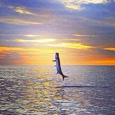 Tarpon jumping - these amazing creatures often can be seen in the waters right outside of the Big Pine Key Fishing Lodge #Fishing #Florida #Islamorada #LearnToFish