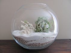 Large Terrariums - Seed to Stem