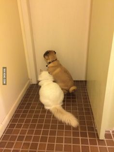 Wife's fan club waiting for her to come out of the bathroom.