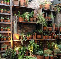 Organic Gardening In Texas Product Garden Nursery, Plant Nursery, Indoor Plants, Air Plants, Succulent Display, Garden Shelves, Plants Are Friends, Garden Shop, Cactus Y Suculentas