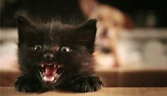 Check out our latest 7 best cat gifs of the week, they're brilliant!