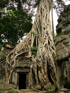 Ta Prohm (Khmer: ប្រាសាទតាព្រហ្ម) is the modern name of a temple at Angkor, Siem Reap Province, Cambodia Ta Prohm, Architecture Religieuse, Angkor Wat Cambodia, Borobudur, Vietnam, Mysterious Places, Phnom Penh, Buddhist Temple, Ficus