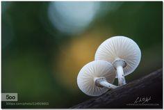 porcelain fungus III by LucVanDeWeghe