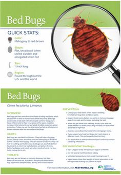 Beau Quick Bed Bug Facts