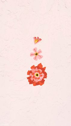 Download free vector of Blooming carnation on a pink wallpaper vector