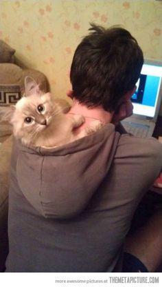 funny cat sleeping hoodie