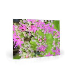 Glass Cutting Board, Hot Pink Succulent Sedum with Fleshy Green Leaves Glass Cutting Board, Cutting Boards, Pink Succulent, Custom Aprons, Selling Handmade Items, Garden Painting, Garden Features, Sell On Etsy, Green Leaves