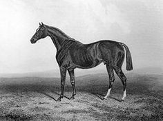 Glencoe(1831)(Colt)Sultan- Trampoline By Tramp. 5x5 To Herod, 5x5x5x5 To Highflyer, 5x5x5x5x5 To Eclipse. 10 Starts 8 Wins 1 Second 1 Third. Won 1834 England's 2000 Guineas, 1835 Ascot Gold Cup. Leading Sire In U.S. In 1847, 1849, 1850, 1854, 1855, 1856, 1857.