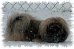 Mysti in the snow