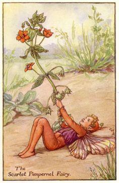Scarlet Pimpernel Fairy