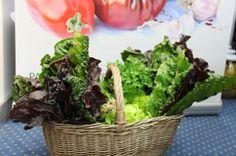 Pachetul cu minerale contine 2 kg de Mangold ( Swiss Chard).  Mangold  nu este doar una dintre cele mai populare plante din bucataria Mediteraneana ci si una dintre cele mai nutritive plante care exista. Frunzele pot fi consumate in salate delicioase, sau integral cu coditele, preparate impreuna la abur sau fierte. Incercati cu paste, ulei de masline, zeama de lamaie si putin usturoi… nu veti regreta :) Picnic, Minerals, Picnics, Picnic Foods