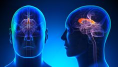 High levels of moral reasoning correspond with increased gray matter in brain -- ScienceDaily