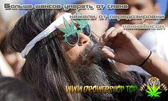Количество марихуаны необходимое для достижения летального исхода.  Большинство людей, хоть раз в своей жизни пробовали коноплю. Не смотря на то, что популярность каннабиса за последние пол века, значительно возросла и продолжает расти, давайте поговорим о том - сколько нужно марихуаны, чтобы убить человека.   Национальный институт онкологии США, провел исследования касательно этой темы.  #weed #cannabis #growershop #конопля #каннабис #марихуана