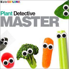 E is for Explore!: Plant Detective: Edible Plant Parts