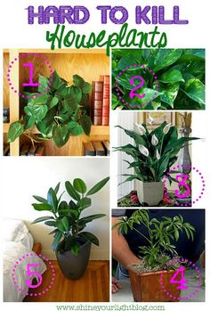It's true -- you really can't kill a peace lily. When it wilts -- water it. Great for air purification in your RV. Safe for kiddos.   Hard to Kill Houseplants Plants in Design.