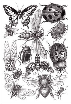 Sketch Book Patterns and Designs - Joyce hamillrawcliffe - Álbumes web de Picasa - Pencil Drawings, Art Drawings, Insect Tattoo, Bug Tattoo, Insect Species, Illustration Art, Illustrations, Insect Art, Bugs And Insects