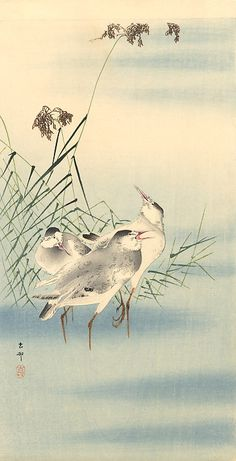 Sandpipers by Ohara Koson. Japanese Bird, Japanese Prints, Chinese Painting, Chinese Art, Bird Illustration, Illustrations, Art Chinois, Ohara Koson, Japan Painting
