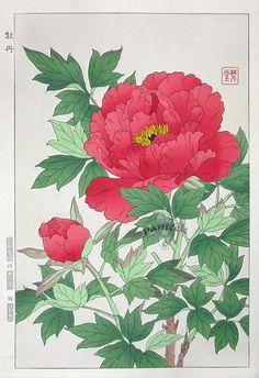 Peony woodblock by Shodo Kawarazaki (1889 - 1973)