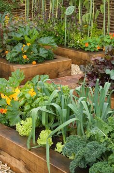Jahzz | #Companion Gardening - balance mix of veges, herbs & flowers.