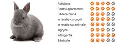 You searched for iepuri - pentruanimale. Blog, Search, Searching, Blogging