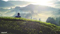 Farmer at tea plantation in Malaysia | premium image by rawpixel.com