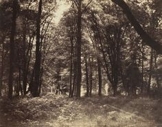 gray forest images | MoMA | The Collection | Gustave Le Gray. Forest of Fontainebleau. 1852