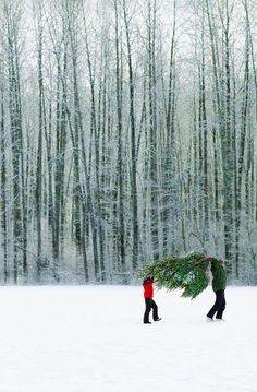 Someday...if I wasn't allergic to Christmas trees I would want to do this.
