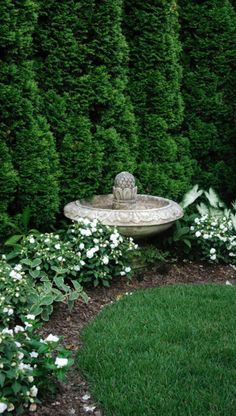Privacy trees softened with white flowering shrubs / #landscaping #ideas #privacy #border #greendreams #GardenShrubs Privacy Landscaping, Outdoor Landscaping, Front Yard Landscaping, Outdoor Gardens, Landscaping Borders, Arborvitae Landscaping, Hydrangea Landscaping, Formal Gardens, Backyard Patio
